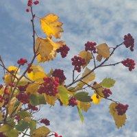 Октябрь и солнце, день чудесный! Что-ж медлишь ты, фотограф местный? :: Михаил Полыгалов
