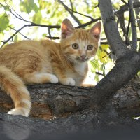 ... котёнок на заборе ... :: JT --------      SHULGA  Alexei