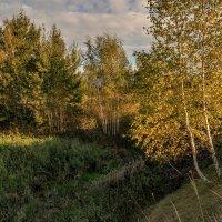 Осень :: Владимир Ефимов