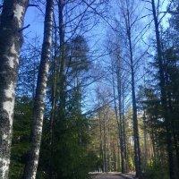 Полупрозрачный лес грустит :: Ирэн