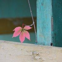 Осенняя зарисовка. :: Лариса Исаева