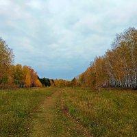 Осенний лес, играя красками ... :: Татьяна Котельникова