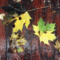 Картина октября. :: Любовь