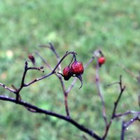 Осенняя печаль :: dindin