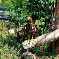 В Белгородском зоопарке (12) :: Алла Григоренко