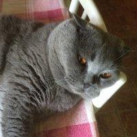 Что то  притомился  я! :: Виталий Селиванов