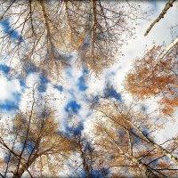 ..Уж небо осенью дышало.. :: Александр Шимохин