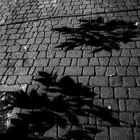Тени на тротуаре :: Marina Bernackaya Бернацкая