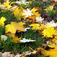 Листья желтые... :: barsuk lesnoi