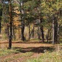 В сосновом лесу :: Наталия Григорьева
