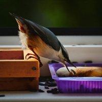 поймаю - не поймаю... :: linnud