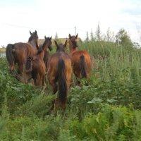 Ходят кони..... :: Татьяна Носова