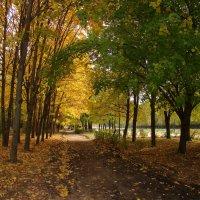 Осенняя аллея :: Татьяна Георгиевна