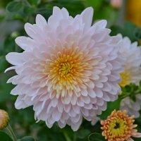 Цветы октября :: Геннадий