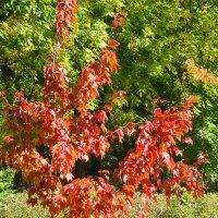 Красные листья делают осенний пейзаж ярким и не скучным :: Маргарита Батырева