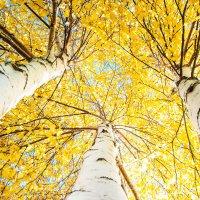 Осень златдглавая. :: юрий Амосов
