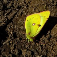 Принимает солнечные ванны на теплой земле. :: vodonos241