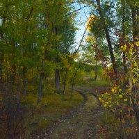 Я из лесу вышел........ :: Олег Рыбалко