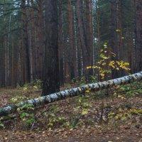 Классовая борьба, она и в лесу. Карл Маркс рулит. :: Михаил Полыгалов
