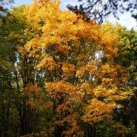 Наконец осень стала золотой! :: Ирина - IrVik