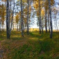 Осенний  лес :: Геннадий С.
