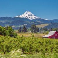 Mount Hood. Oregon. USA :: Andy Zav