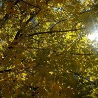 Лучик осеннего солнца :: Serg
