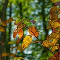 Осенняя палитра (2) :: Виталий