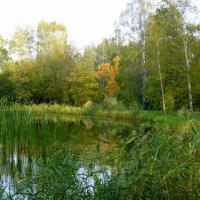 Осенний пейзаж :: Татьяна Лобанова