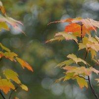 Осень средней тяжести... :: Wirkki Millson