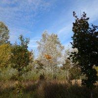 Осенний этюд с серебристыми тополями :: Елена