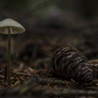 В темном лесе :: Роман Пацкевич