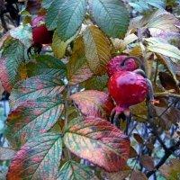 Осенние листья :: Вера Щукина