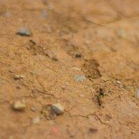 муравьиная жизнь :: Аркадий Баринов
