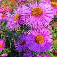 Осенние цветы :: Виталий Андрейчук