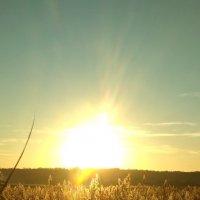 Ярче солнца- только солнце!!! :: Marusya Boguslavka