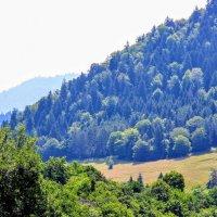 Альпийско - Боржомские высокогорные  луга :: Вячеслав Случившийся