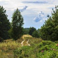 дорога на болотах :: оксана