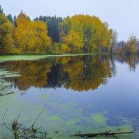 Утро... Осень... Туман... :: Евгений Осипов