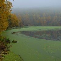 Утро... Осень... :: Евгений Осипов