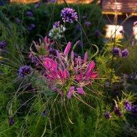 Цветы :: dindin