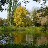 Осень в ботаническом саду :: Татьяна Лобанова