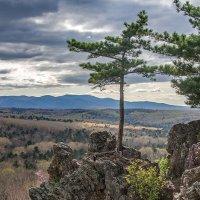 Дерево на скале :: Anna Chepkova