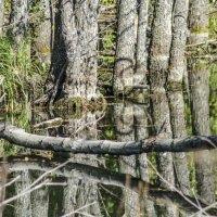 Старый пруд :: Андрей Щетинин