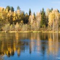 Река в осенней одежке :: Яна Старковская