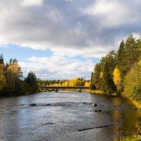 Золотая речка :: Яна Старковская