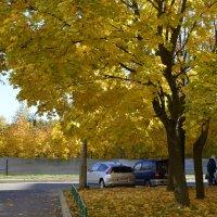 Теплый день в октябре :: ЕСЕНИЯ ♥