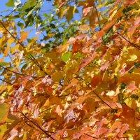 Пламенеет осень... :: ЕСЕНИЯ ♥