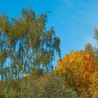 Осеннее :: Виталий