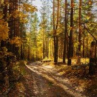 Золотой лес :: Вера Сафонова